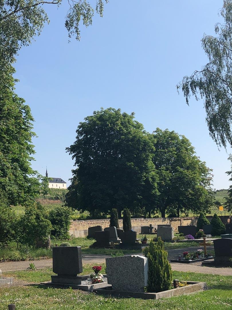 Blick über Friedhof mit Bäumen